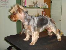 Salon Strzyżenia i Pielęgnacji Psów Mr.Dog